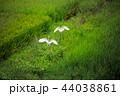 白鷺30 44038861