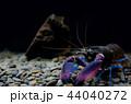 ザリガニ アクアリウム 水族園の写真 44040272