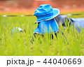 稲 水田 米の写真 44040669