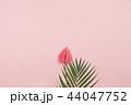 お花 フラワー 咲く花の写真 44047752