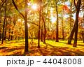 秋 背景 きれいの写真 44048008