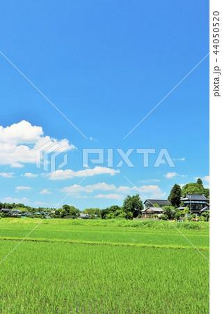 爽やかな青空と農村の風景 44050520