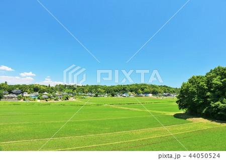 爽やかな青空と田園風景 44050524