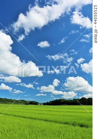 夏の青空と田んぼ 44050525