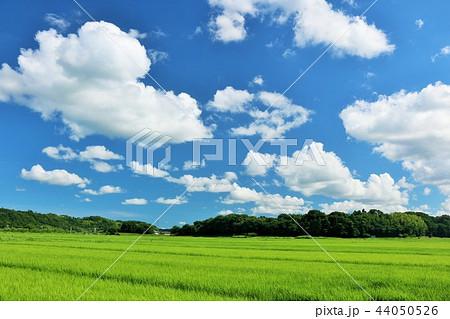 夏の青空と田んぼ 44050526