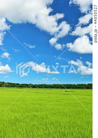 夏の青空と田んぼ 44050527