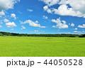 晴れ 晴天 田んぼの写真 44050528
