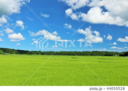 夏の青空と田んぼ 44050528