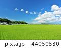 青空 夏 田んぼの写真 44050530