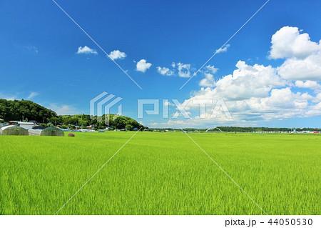 夏の青空と田んぼ 44050530