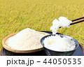 米 新米 ご飯の写真 44050535