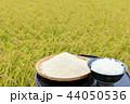 米 新米 ご飯の写真 44050536