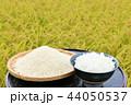 米 新米 ご飯の写真 44050537