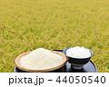 米 新米 ご飯の写真 44050540