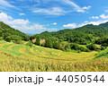 稲 米 山の写真 44050544