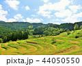 稲 米 山の写真 44050550