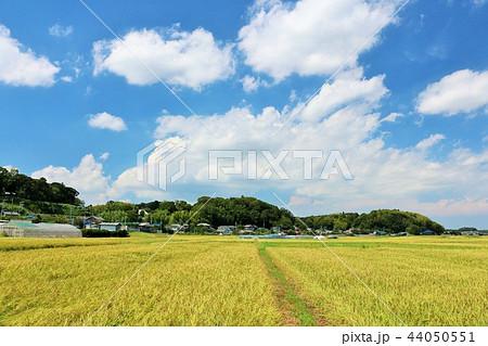 秋の青空と田んぼ 44050551