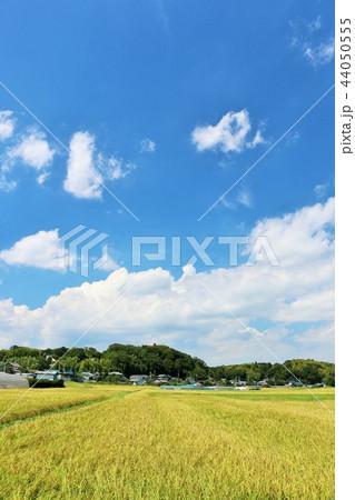 秋の青空と田んぼ 44050555