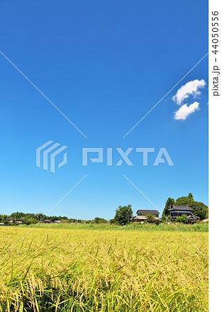 気持ちいい青空の田園風景 44050556