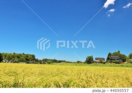 気持ちいい青空の田園風景 44050557