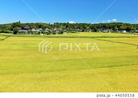 気持ちいい青空の田園風景 44050558