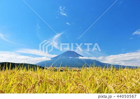 秋晴れの青空と田んぼ そして富士山 44050567