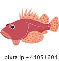 魚 海水魚 カサゴのイラスト 44051604