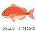 魚 海水魚 タイのイラスト 44052043