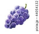 フルーツ ぶどう 巨峰のイラスト 44054132