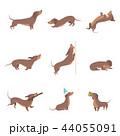 ダックスフンド わんこ 犬のイラスト 44055091