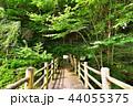 板室 橋 森林の写真 44055375