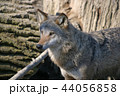 動物 けもの 獣の写真 44056858