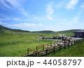 馬 午 牧草地の写真 44058797
