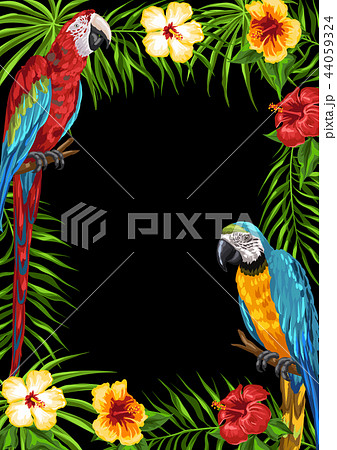 Tropical frame with parrots. 44059324