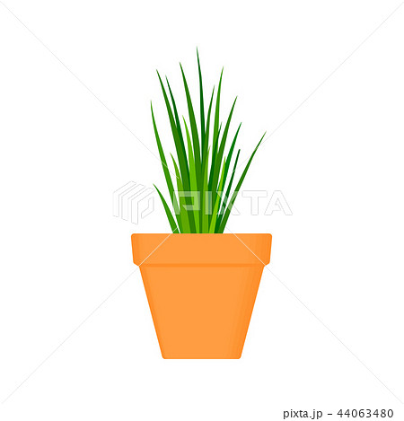 chives vector culinary herb in terracotta pot. 44063480