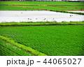 田園風景 44065027