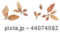 白バック 葉っぱ どんぐりのイラスト 44074082