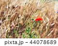 花 お花 フラワーの写真 44078689