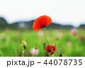花 お花 フラワーの写真 44078735
