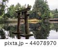 アオサギ 青鷺 日本の写真 44078970