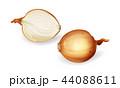 タマネギ 玉ねぎ 玉葱のイラスト 44088611