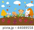 秋 芋掘り こどものイラスト 44089558