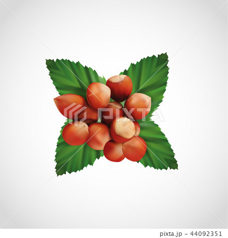 Realistic pile of hazelnut and nuts leaf, vector 44092351