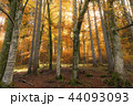 紅葉 落ち葉 落葉の写真 44093093