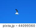カモメ 44099360