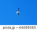 カモメ 44099365