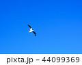 カモメ 44099369