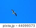 カモメ 44099373