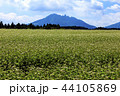 畑 花 空の写真 44105869