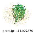 スギ花粉 花粉 白バックのイラスト 44105870